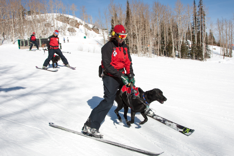 avalanche dogs 2