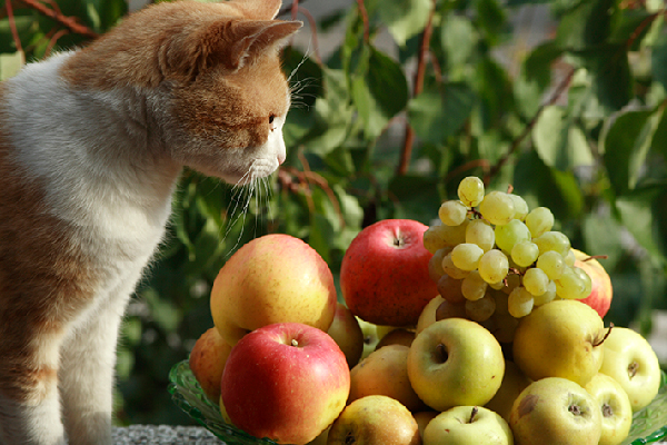 Cats and Grapes