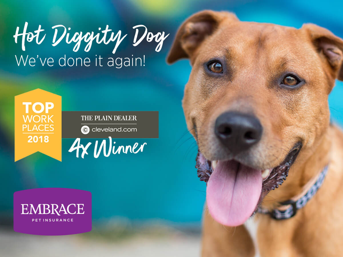 Embrace Pet Insurance 2018 Top Workplaces Award banner
