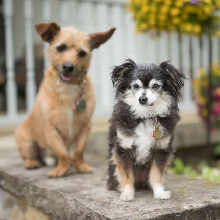 Two small dogs outside