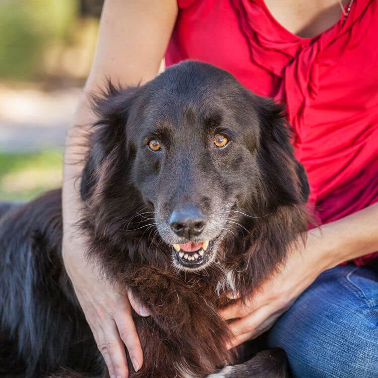 Black dog with woman in red shirt