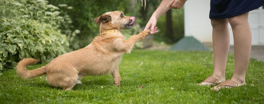 Girl shaking paw with dog outside