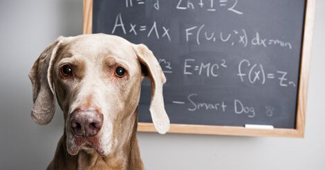 Back to School for Pets