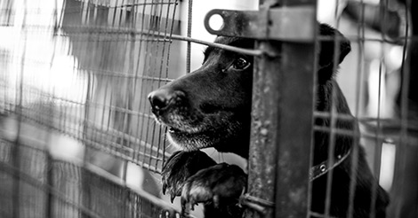 black dog in a shelter