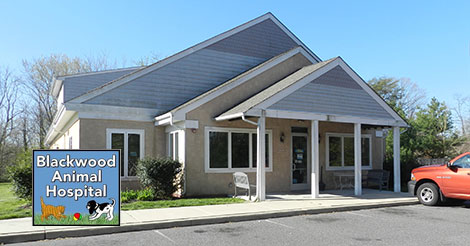 Blackwood Animal Hospital