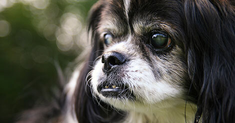 What can cause sudden blindness in cats and dogs?