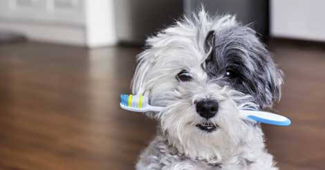 Brushing Your Pet's Teeth