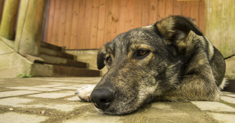 Cancer Symptoms in Pets