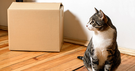 cat-next-to-moving-box