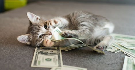 cat with money in mouth