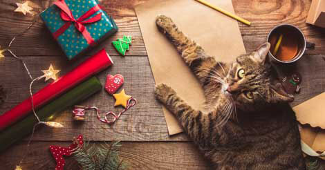 cat proofing decorations