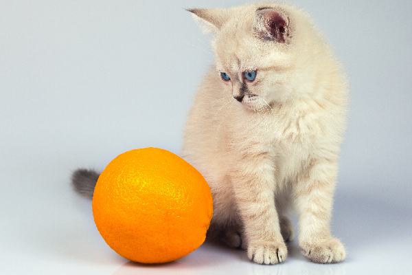 cat-looking-at-an-orange