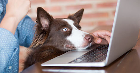 claiming pets on taxes