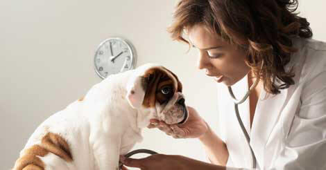 Cost of Veterinary Care