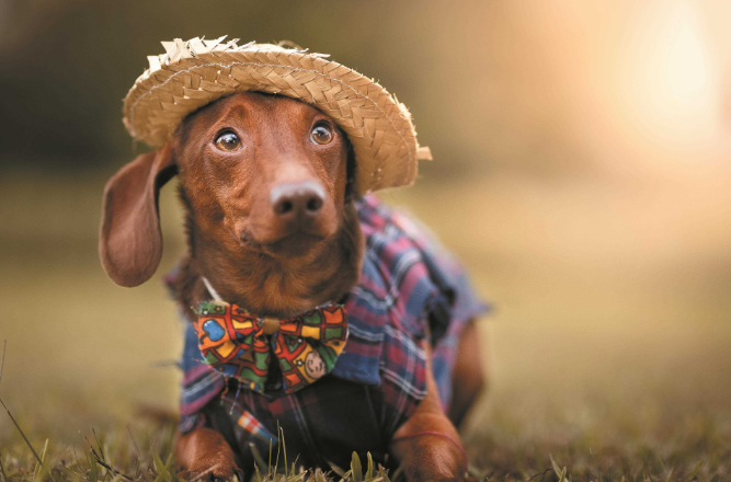 country-dog-in-hat