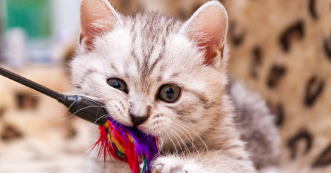 cute_kitten_playing_with_toy