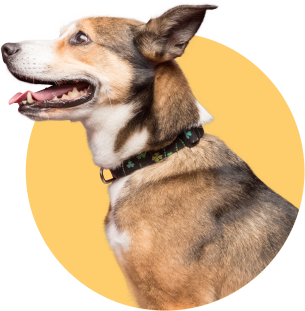 dog in circle smiling and looking left