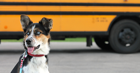 dog-in-front-of-school-bus (002)