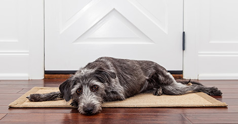 dog on mat by door