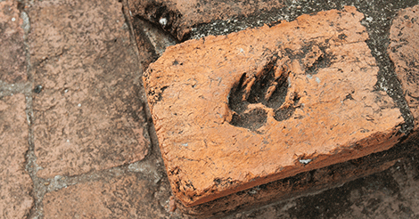 dog paw print in brick