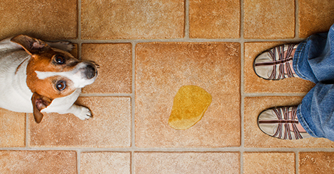 dog-pee-on-tile-floor