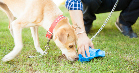 dog sniffing next to owner picking up its waste