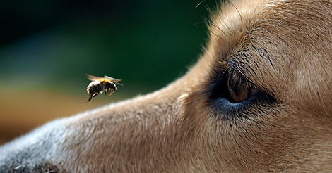 dog-staring-at-a-bee