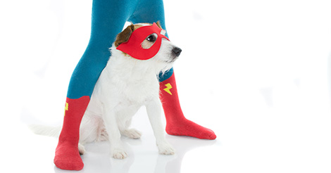 dog-superhero