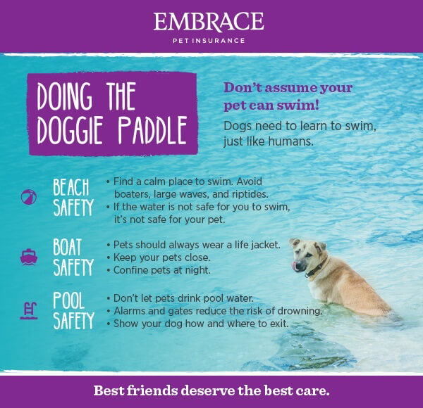 dog-swimming-infographic