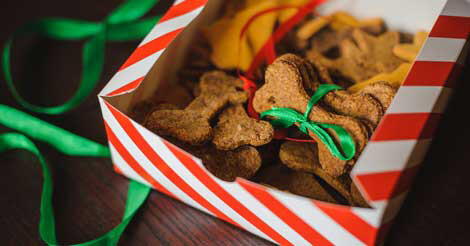Christmas Dog and Cat Treats