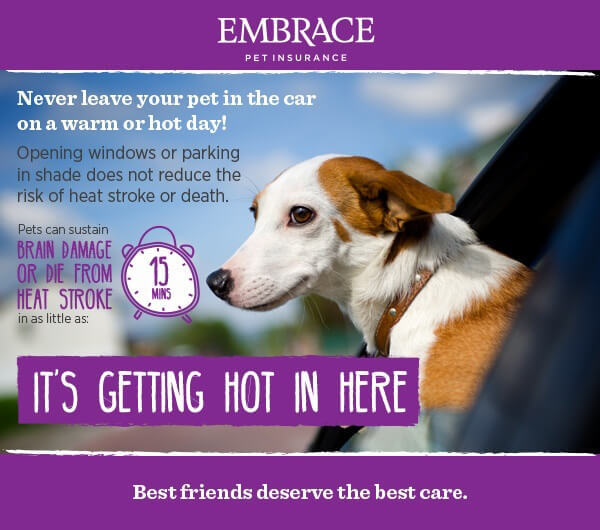 Infographic of pet car safety for hot weather