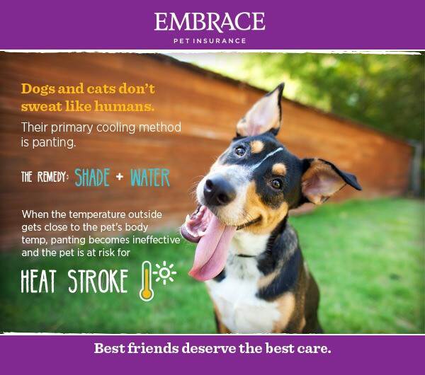 Poster displaying facts of canine heat stroke with a cattle dog sitting in front of a fence