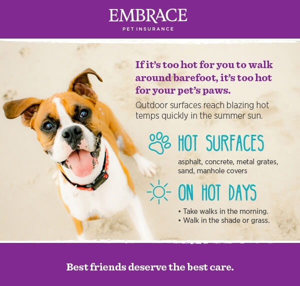 Hot weather infographic to protect your dog's paws on walks