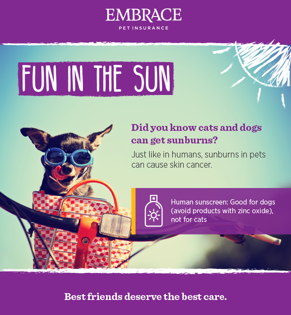 Sun Protection for Dogs