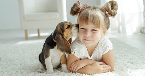 Little girl with Beagle puppy