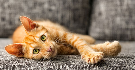 orange-cat-with-claws-out
