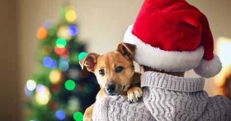 pet proofing holiday decorations