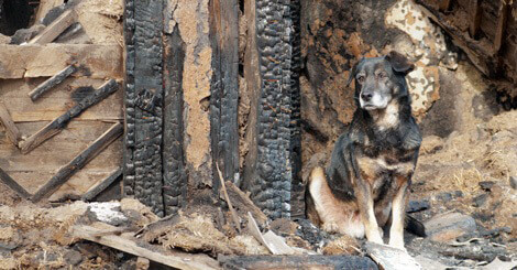 Pets and House Fires