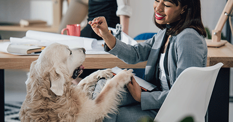 Golden Retriever with Woman at Pet-friendly Office