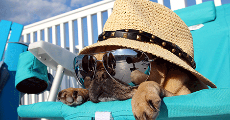 Pug in Hat and Sunglasses