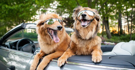road-trip-with-pets