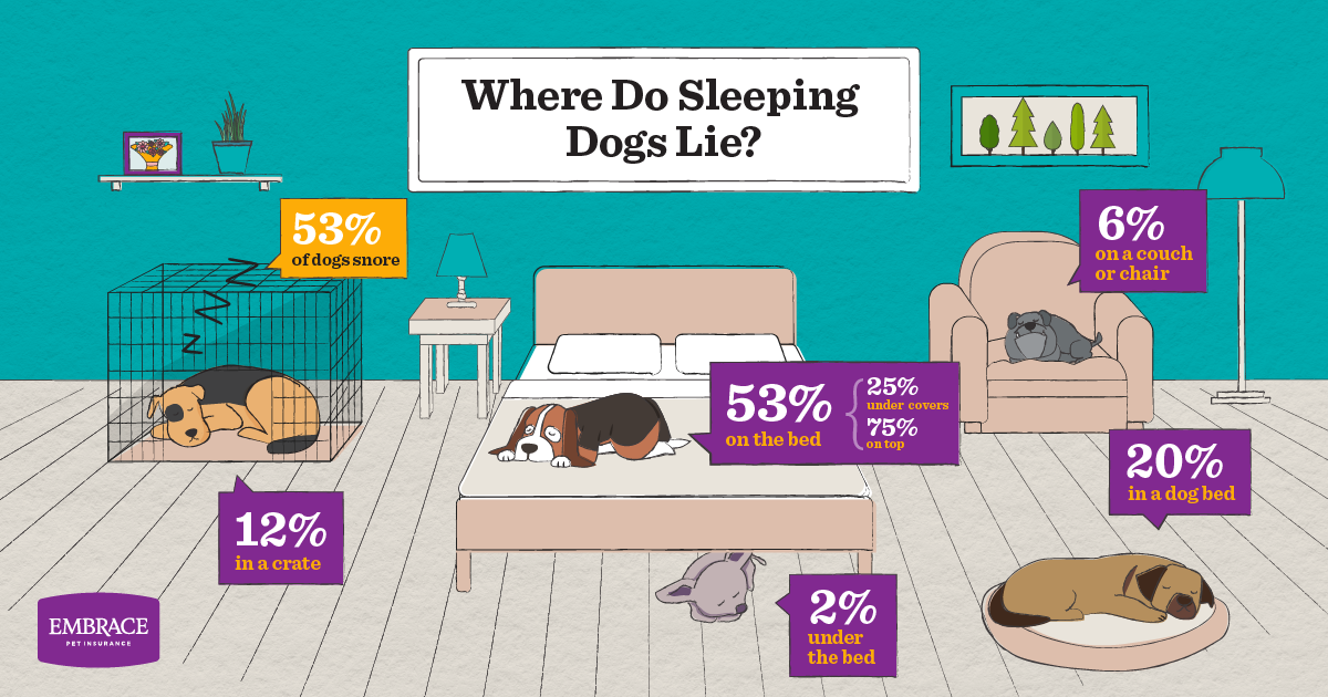 Where do sleeping dogs lie? We found out! (Infographic)