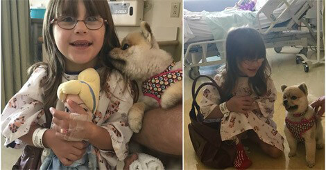 Animal-assisted Therapy Dog