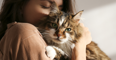 tabby cat snuggling owner