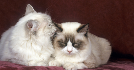 two cats resting by each other