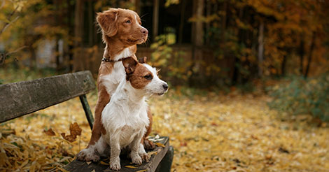 two dogs on a bench in the fall