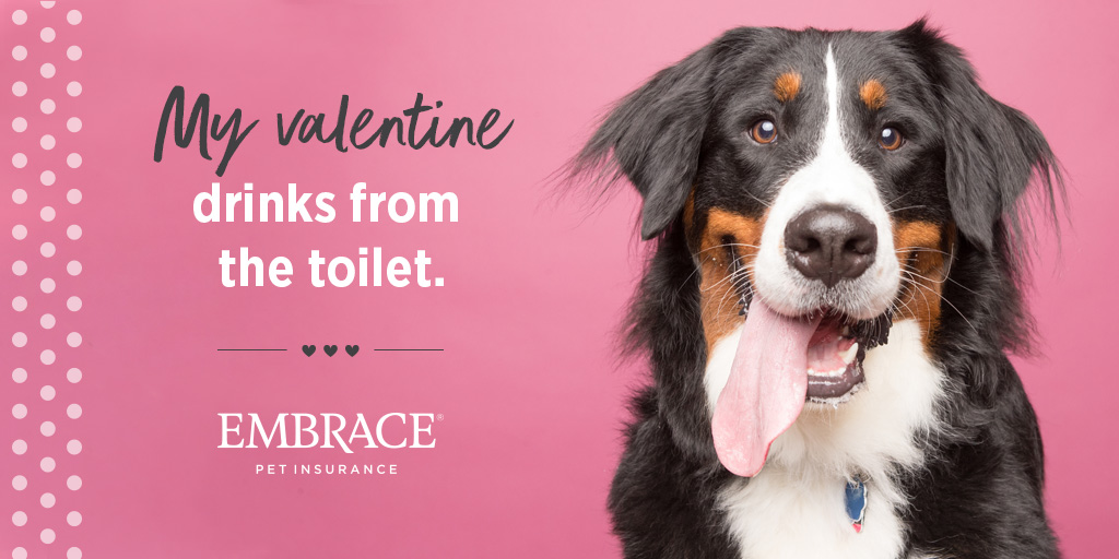 dog valentine meme - Bernese Mountain Dog