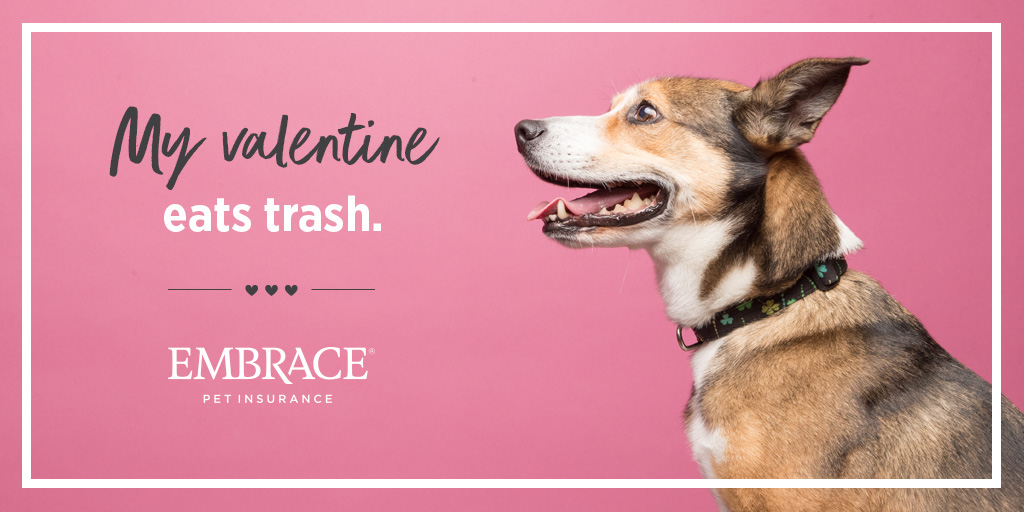 Dog Valentine Meme - Mixed Breed Dog