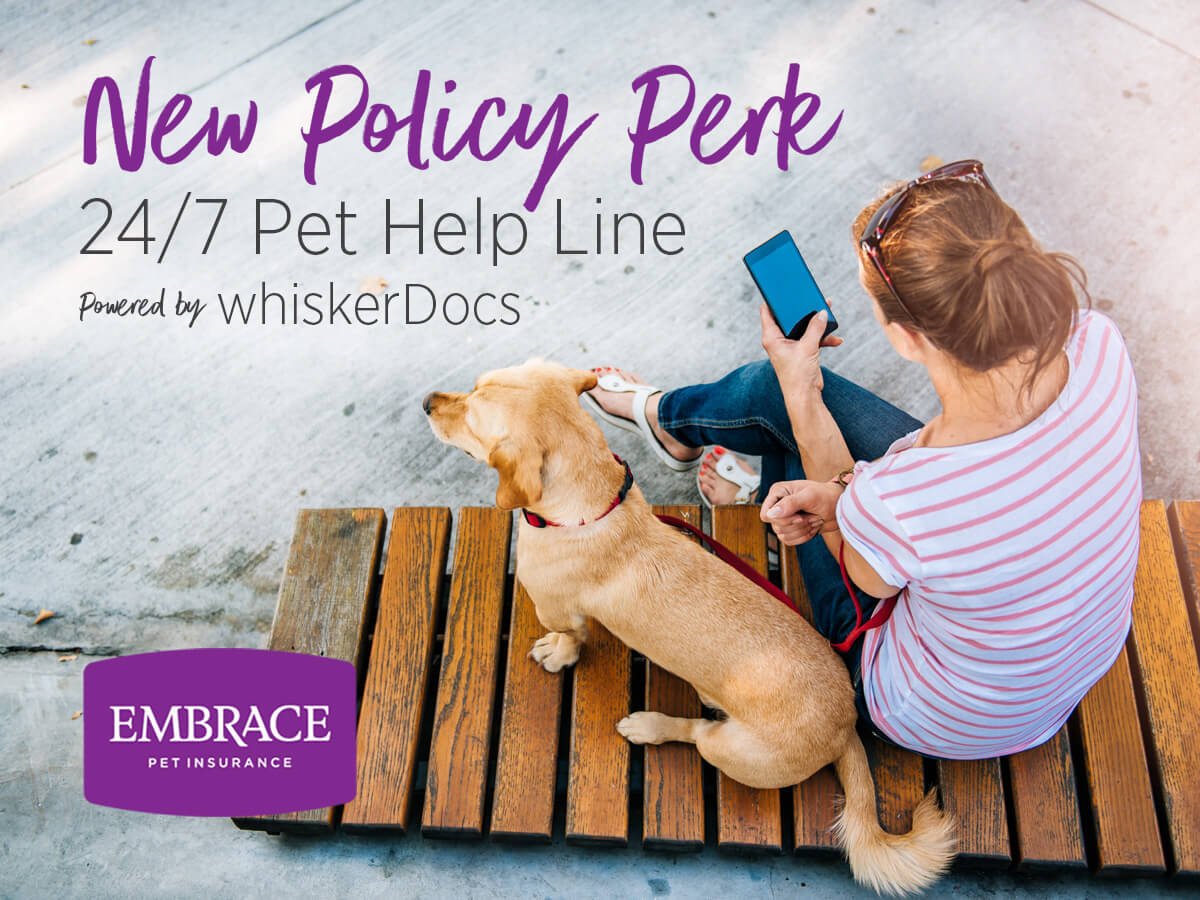 whiskerDocs partners with Embrace Pet Insurance