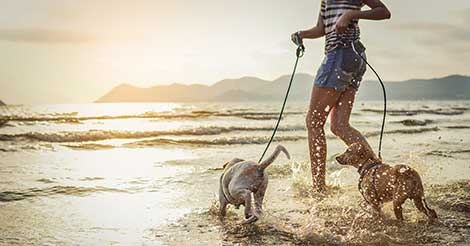 woman playing with dogs on beach